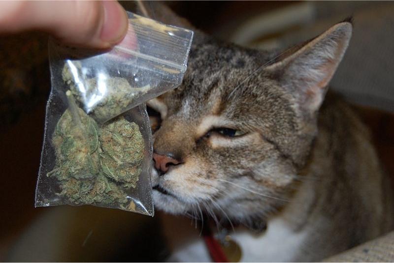 Catweed