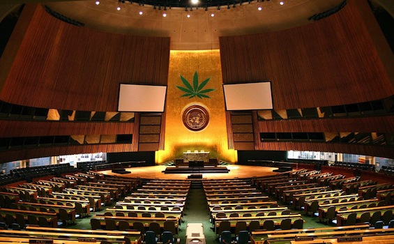 Unitednations Weed